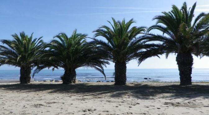 Palmen vor Benicarlo