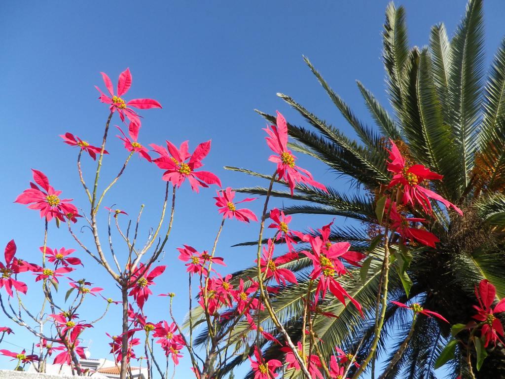 unter palmen aus stahl