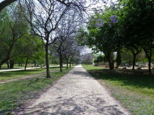 IMGP1926_Seelenbaumlerin Valencia Turia Gärten