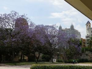 IMGP1943_Seelenbaumlerin Valencia Turia Gärten