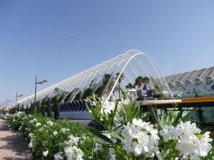 IMGP2675_Seelenbaumlerin Valencia Stadt der Künste