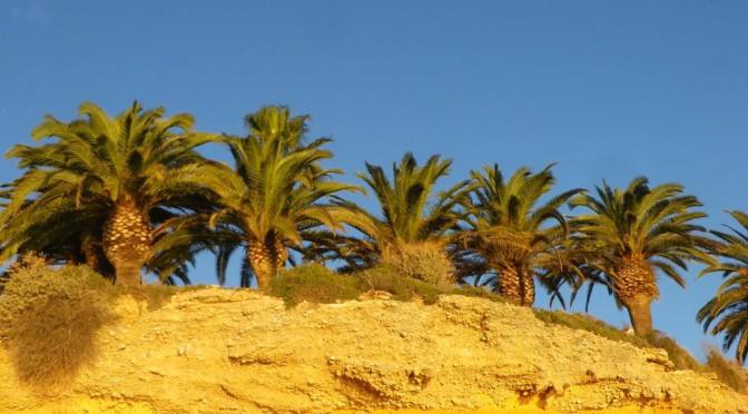 Vinar'os Costa del Azahar