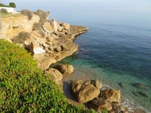 Seelenbaumlerin auf ihrem Küstenspaziergang