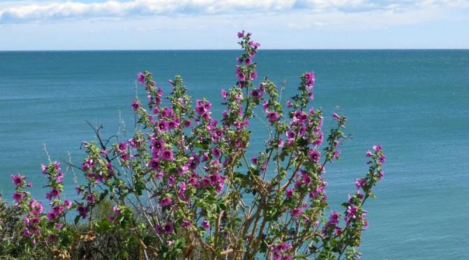 März Impressionen im Norden von Vinaròs